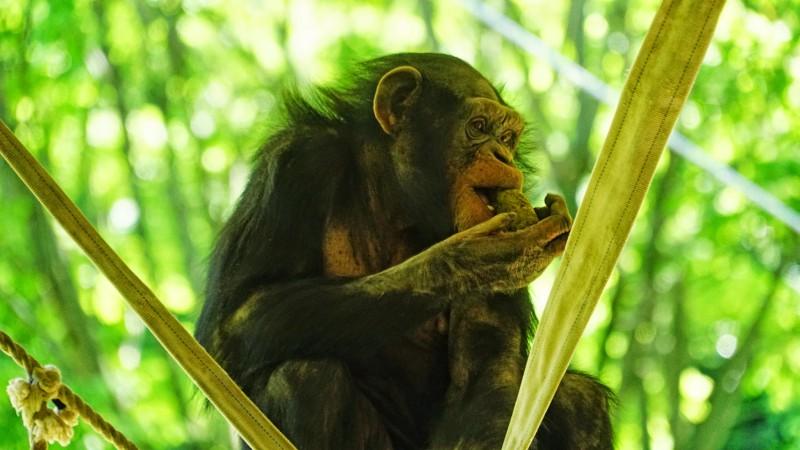多摩動物公園 アイキャッチ画像