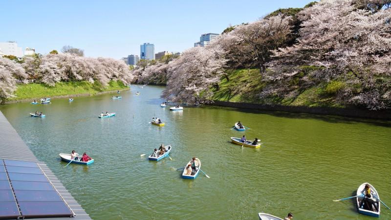 千鳥ヶ淵 桜 アイキャッチ
