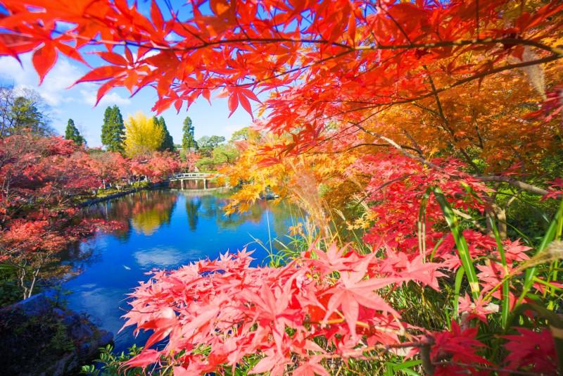 京都 永観堂 紅葉 アイキャッチ画像