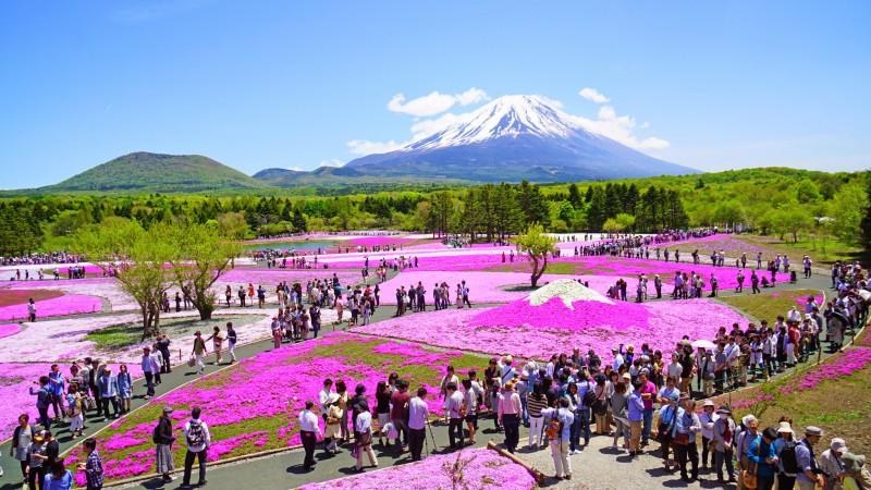 富士芝桜まつり アイキャッチ画像