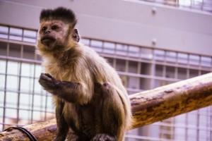 札幌 円山動物園 アイキャッチ画像