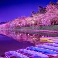 弘前公園 夜桜 ライトアップ アイキャッチ画像