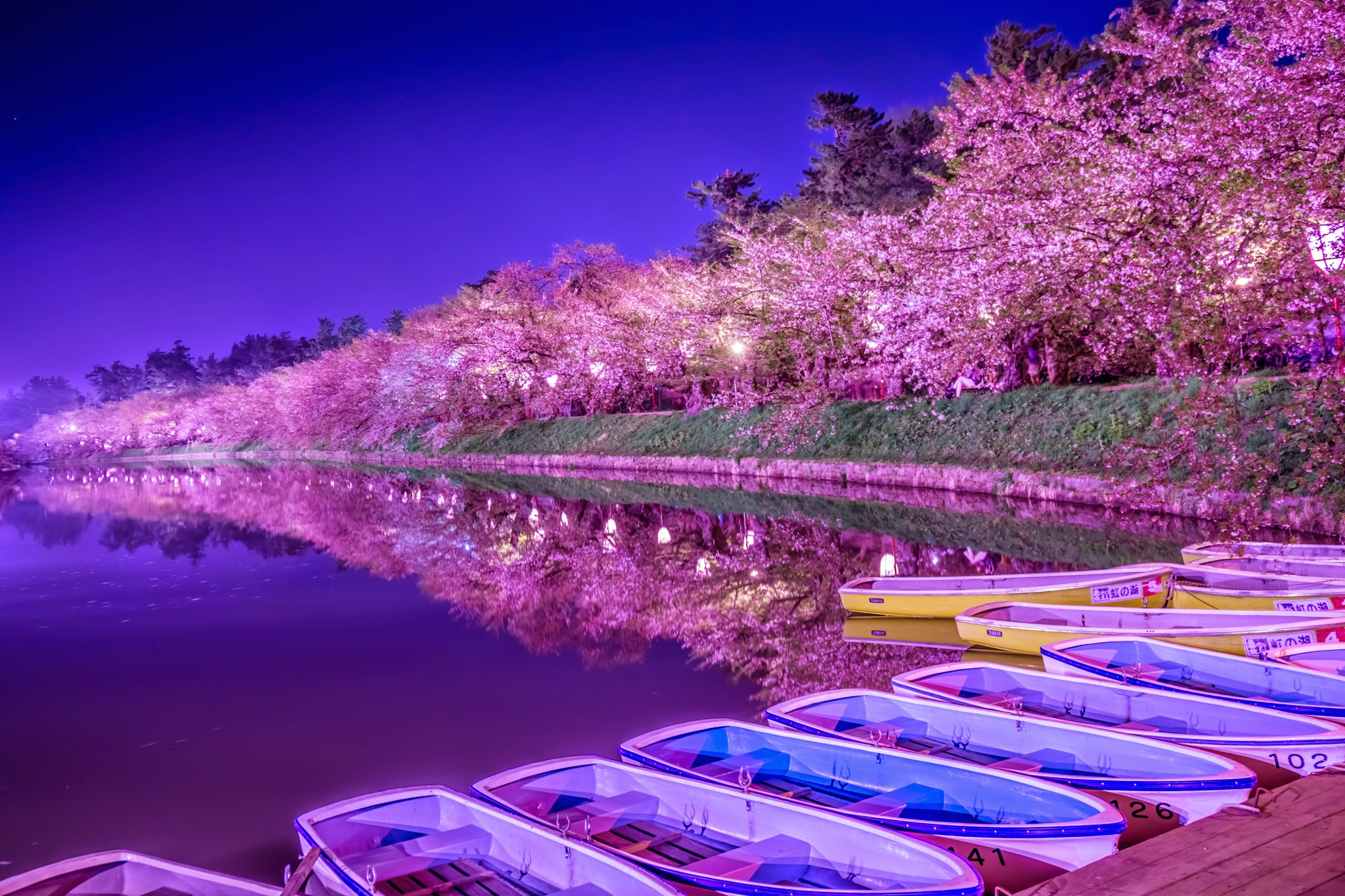 Hirosaki Park cherry blossoms illumination featured image