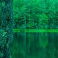 Mishaka Pond featured image1