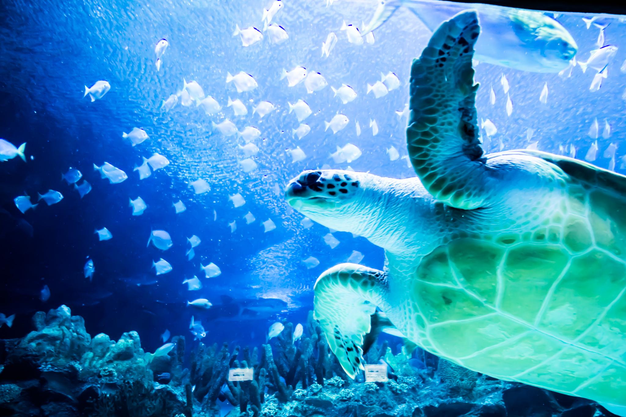 KLCC水族館 アイキャッチ画像