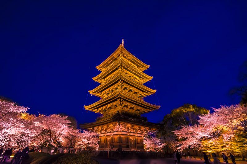 京都 東寺 桜 ライトアップ アイキャッチ画像