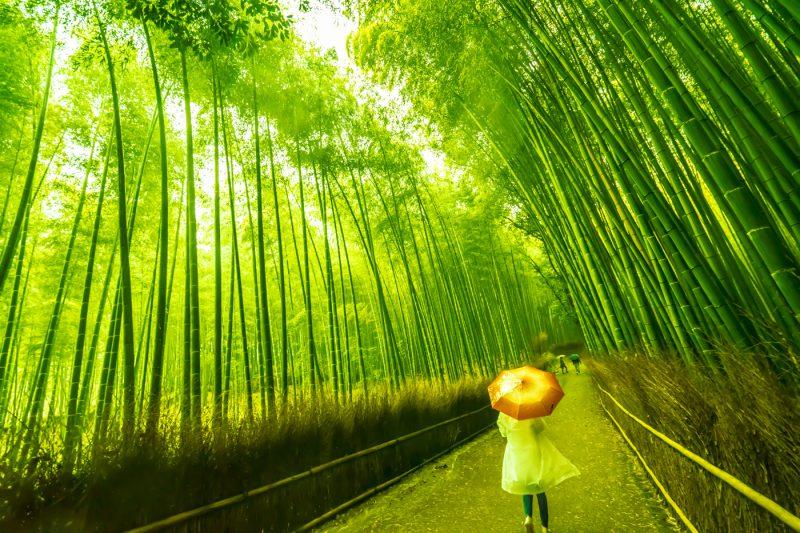 嵐山 竹林の道 アイキャッチ画像