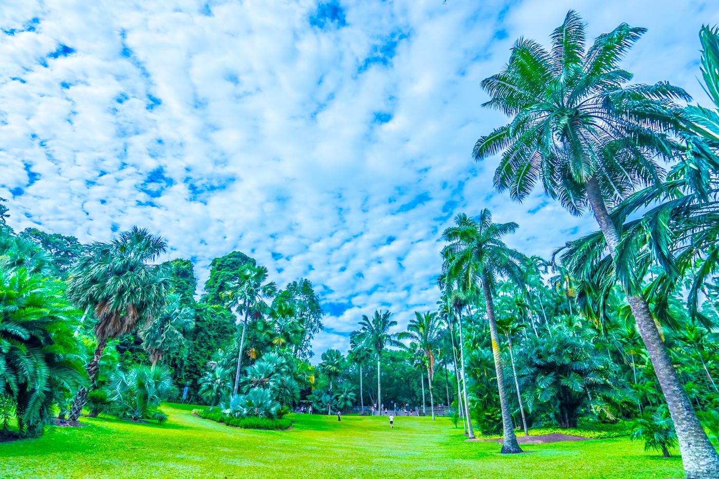 シンガポール植物園(ボタニック・ガーデン) アイキャッチ画像