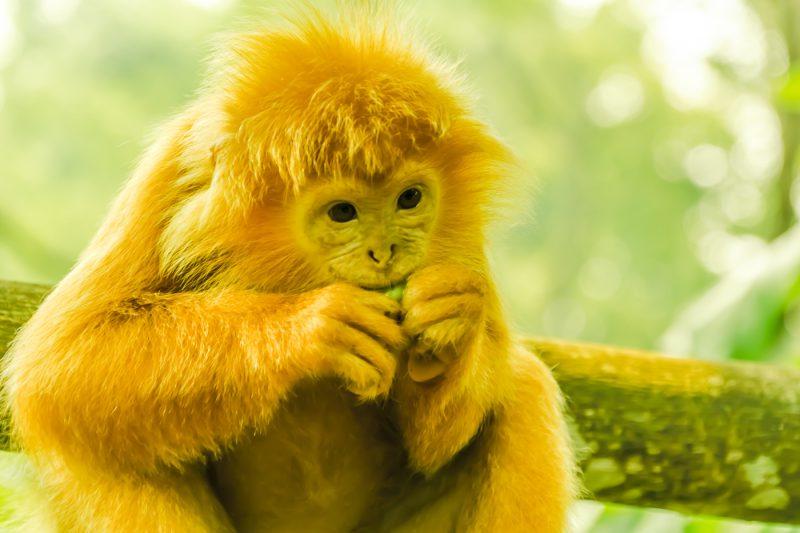 シンガポール動物園 アイキャッチ画像