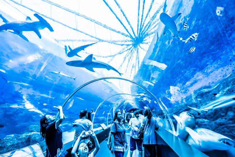 シンガポール セントーサ島 シー・アクアリウム アイキャッチ画像