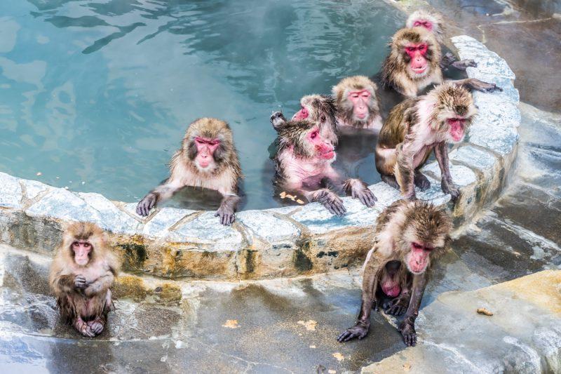 函館市熱帯植物園 サル山温泉 アイキャッチ画像