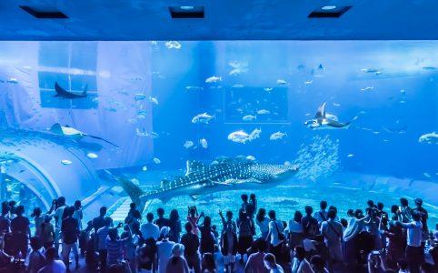 沖縄 美ら海水族館 アイキャッチ画像