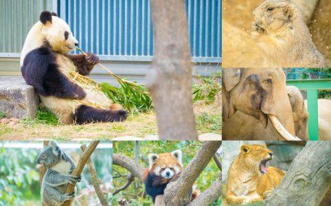 神戸市立王子動物園 アイキャッチ画像